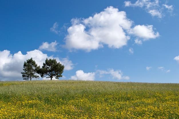 グリーンフィールドで成長している2つの木の美しいショット 無料写真