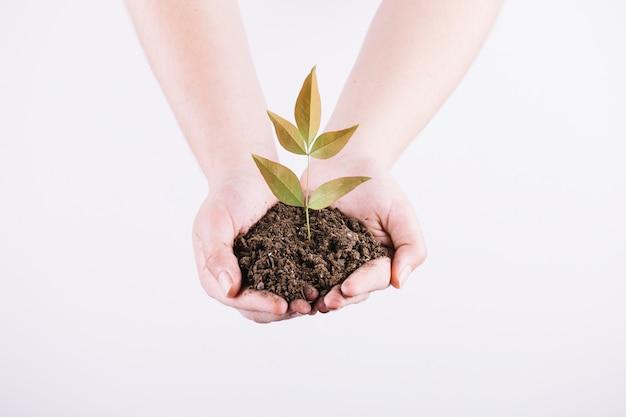 白い背景に土を持つ苗を保持して2つの手のクローズアップ 無料写真