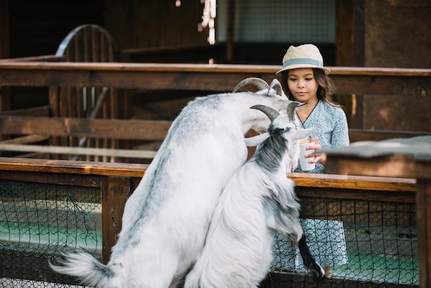 納屋の中に2頭のヤギを養う少女の肖像 無料写真