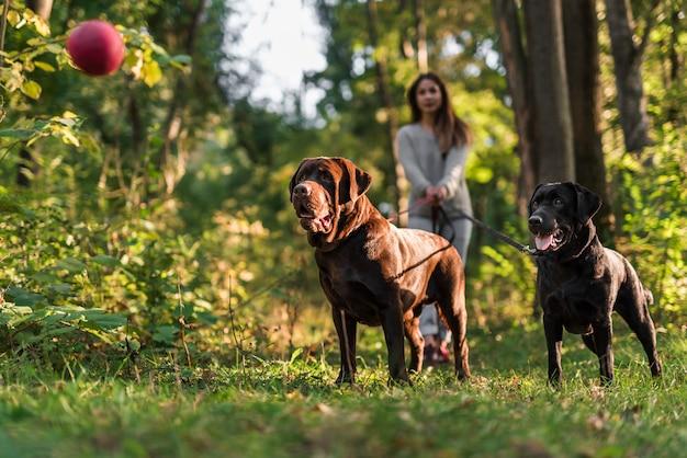 2匹の犬がペットの飼い主と空中で赤いボールを見て 無料写真