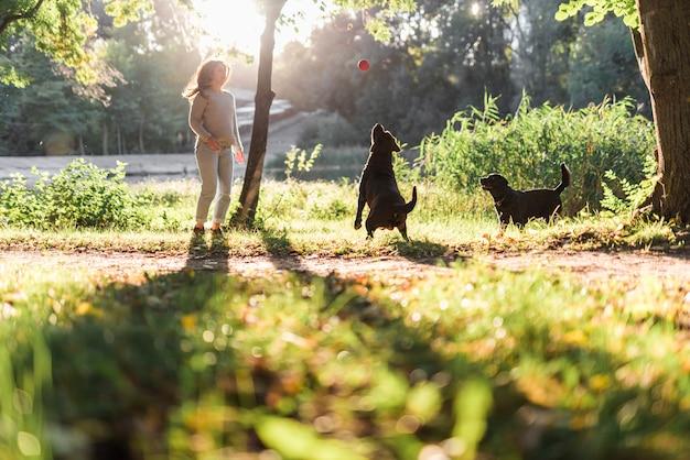 2匹の犬が公園でボールで遊ぶ 無料写真