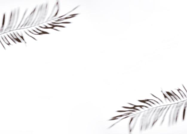 白い背景の上の2つのヤシの葉 無料写真