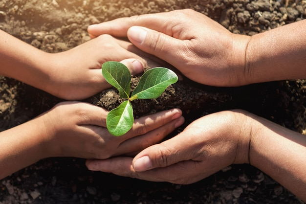 世界を救うために若い木を植えるのを助ける2つの手 Premium写真