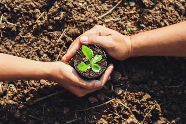 2つの手の庭で木を植えること Premium写真