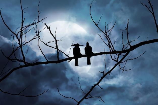 雲の中の月光のある背景の夜景の枝に2羽の鳥のシルエット Premium写真