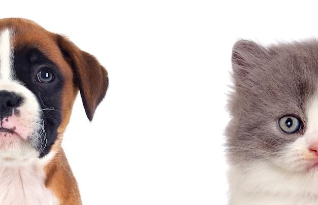 2つの美しい子犬 Premium写真