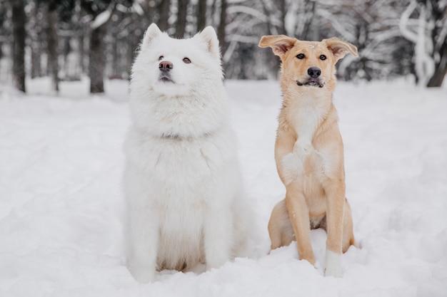 森の中の雪の上に座っている2つの面白い犬 Premium写真