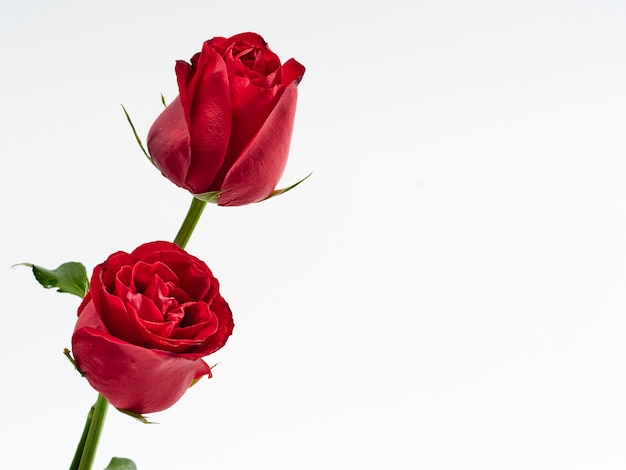 バレンタインカード。 2つの赤いバラ。 Premium写真