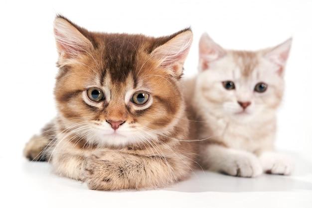2匹の子猫のクローズアップ。 Premium写真