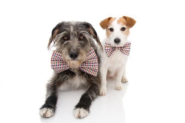 2匹の犬が誕生日または新年着用のヴィンテージのボウタイを祝います。 Premium写真
