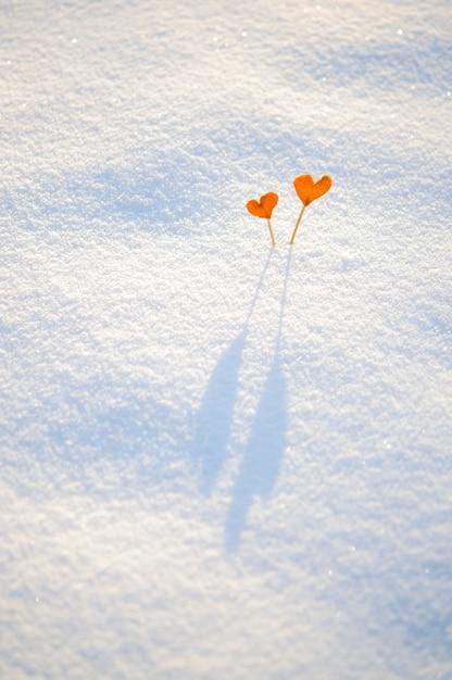 白い雪の上の棒に2つのビンテージオレンジみかんの心 Premium写真
