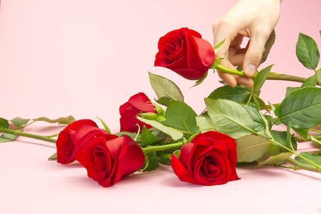 若い男の手は、ピンクの背景に赤いバラを発生させます。聖バレンタインの日、母の日、3月8日の最愛の人にぴったりのバラを選ぶというコンセプト。 Premium写真