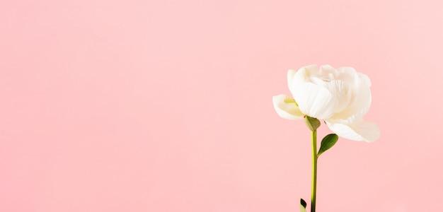 スペースとピンクの背景の牡丹のクローズアップ。結婚式、母の日、3月8日、バレンタインの日のレイアウトカード。 Premium写真