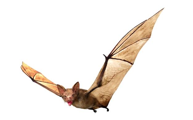 ハロウィーンの装飾、3 dレンダリングのために分離された飛行の吸血コウモリ Premium写真