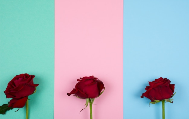 色とりどりの紙の背景に3つの赤いバラ Premium写真