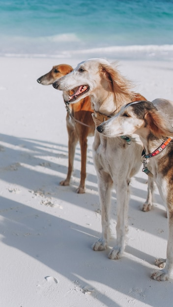 インド洋の海岸を歩く3匹の犬 無料写真