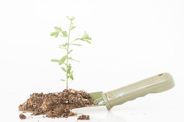 金属の緑のシャベルの土と砂による小さな3つの成長 Premium写真