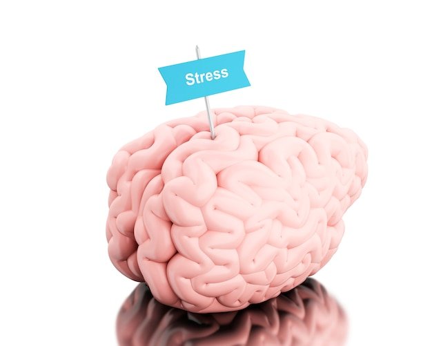 3d brain with a signboard and word stress. Premium Photo