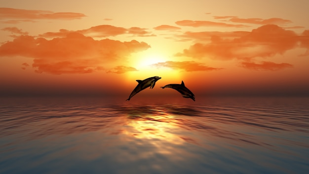 3d dolphins Free Photo