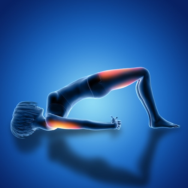 3D Female Figure in Bridge Pose with Muscles Used