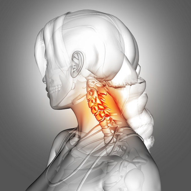 3d female figure with neck bones highlighted Free Photo