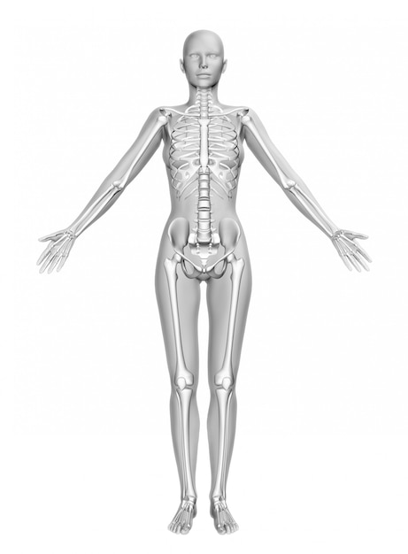 3d female figure with smooth skin and skeleton Free Photo