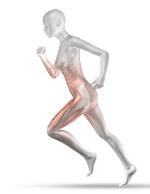 3d female medical figure with partial muscle map jogging Free Photo