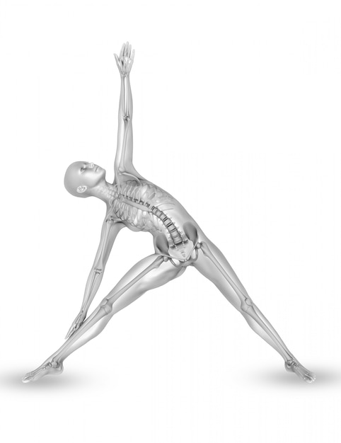 3d female medical figure with skeleton in yoga pose Free Photo