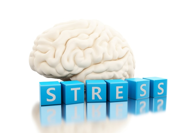 3d human brain with stress word in cubes Premium Photo