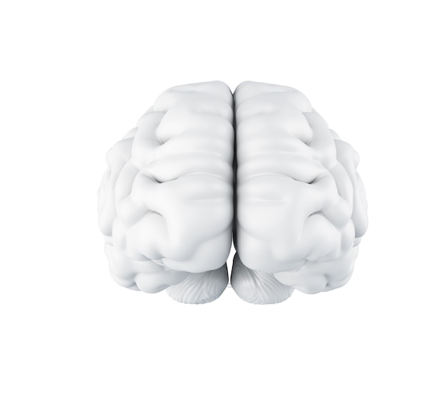 3d human brain. Premium Photo