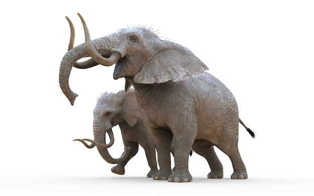 3d illustration elephant isolate on white background with clipping path. Premium Photo
