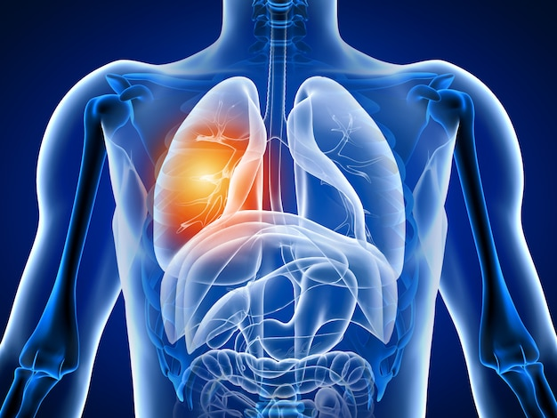 3d illustration human body with lung pain Premium Photo