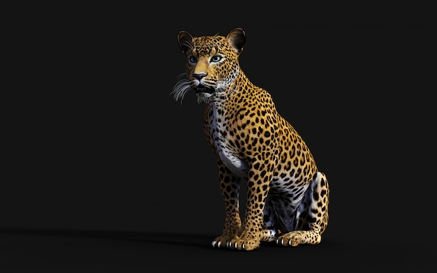 3d illustration of isolated leopard on black background Premium Photo