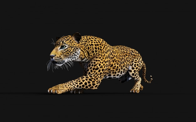 3d illustration of isolated leopard on black background Premium Photo