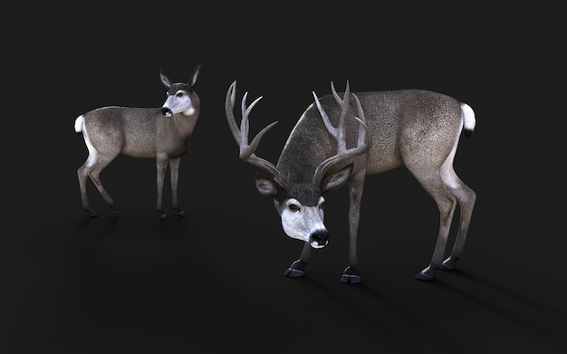 3d illustration of mule deer wildlife in the american west isolate on black background with clipping path Premium Photo