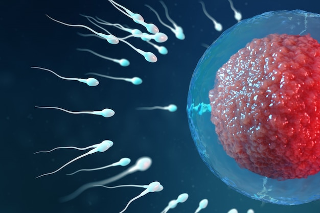 3d illustration sperm and egg cell, ovum. sperm approaching egg cell. native and natural fertilization. conception the beginning of a new life. ovum with red core under the microscope, movement sperm Premium Photo