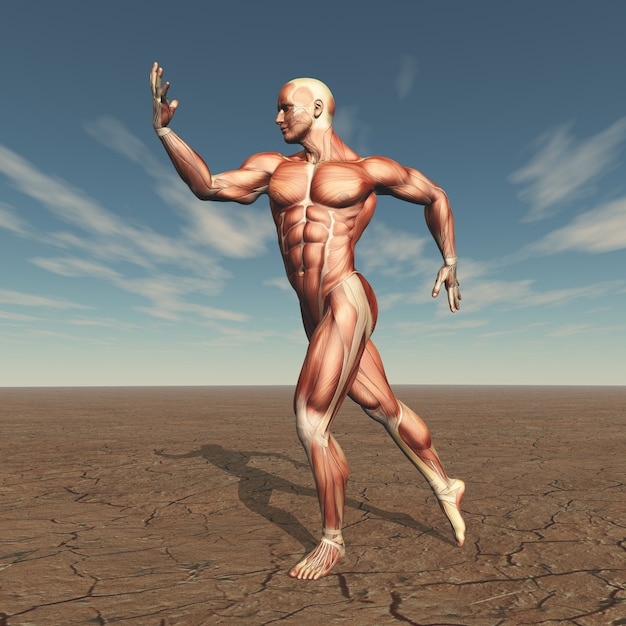 3d image of a male body builder with muscle map in barren landscape Free Photo