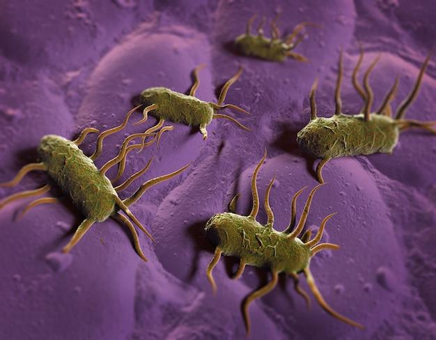 3d иллюстрация бактерии listeria monocytogenes, грамположительной бактерии с жгутиками, вызывающей листериоз Premium Фотографии
