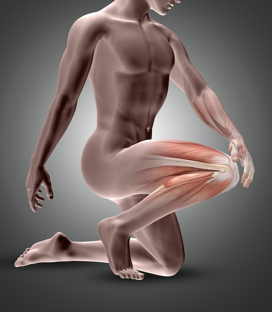 3d male figure with knee muscles highlighted Free Photo