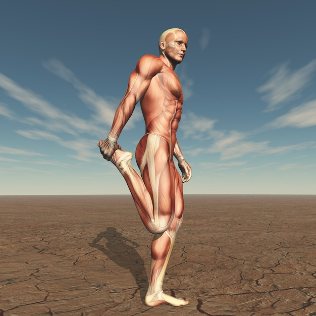 3d male figure with muscle map in barren landscape Free Photo