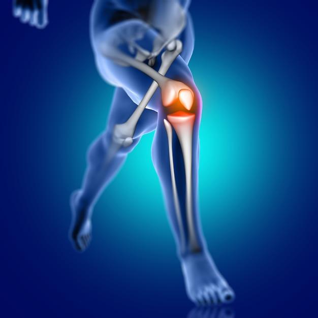 膝の骨が強調表示された3 d男性医療図 無料写真
