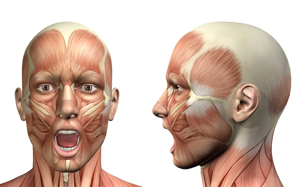 3d male medical figure showing mandible depression front and side view Free Photo