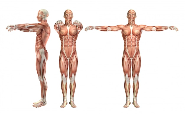 3d male medical figure showing shoulder abduction and horizontal abduction Free Photo