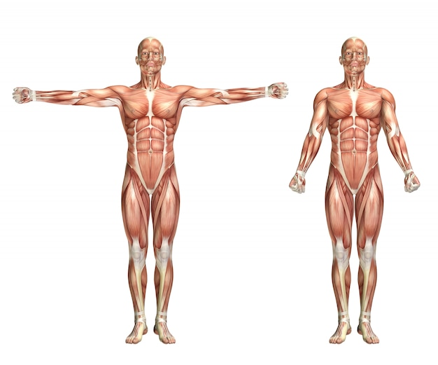 어깨 찰과상을 보여주는 3d 남성 의료 그림 무료 사진