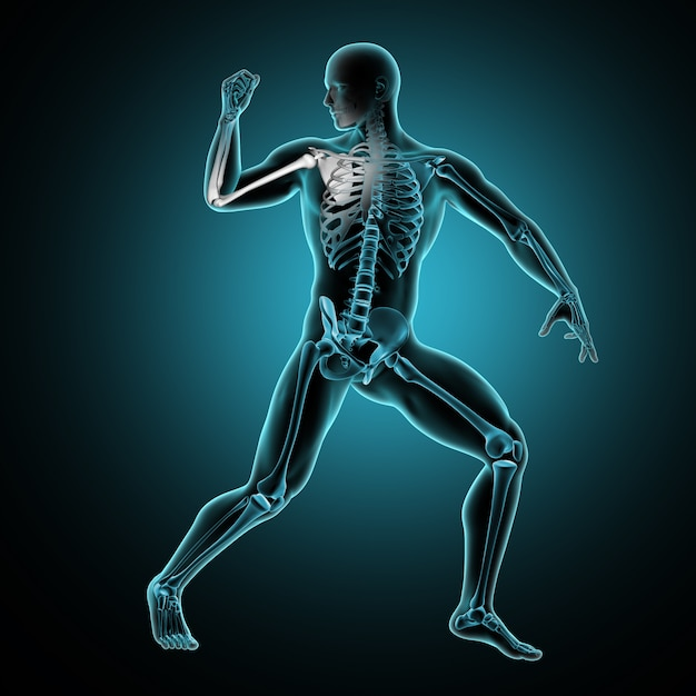 3d male medical figure with arm raised and arm bones