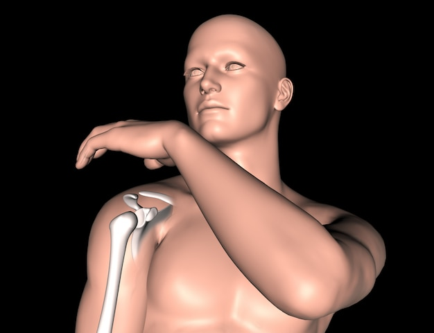 3d male medical figure with shoulder bone highlighted Free Photo