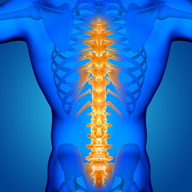 3d male medical figure with spine highlighted Free Photo