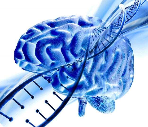 3d medical background with dna strand and human brain Free Photo