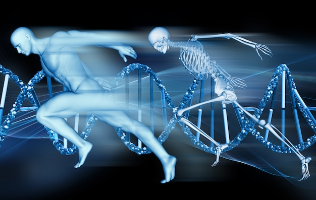 3d medical background with male figure and skeleton sprinting on dna strands Premium Photo