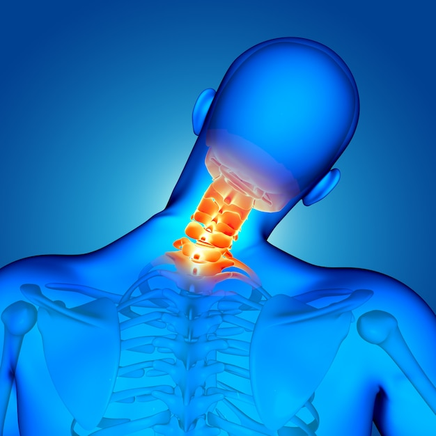3d medical male figure with neck bones highlighted Free Photo
